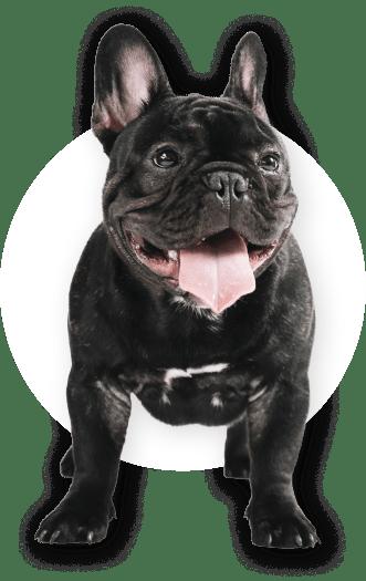 Petmaqig dog footer